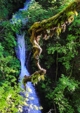 Shepard's Dell Falls along the Columbia River Gorge