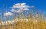 Blue sky highlights the tallgrass at a desert spring in Desert National Wildlife Refuge