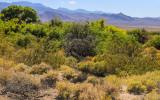 Trees and vegetation along a desert spring in Desert National Wildlife Refuge
