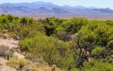 Spring fed vegetation in Desert National Wildlife Refuge