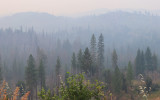 Smoke fills the forest during the 2018 Ferguson Fire in Yosemite National Park