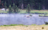Pond in Dana Meadows steams after a rainstorm along the Tioga Road in Yosemite National Park