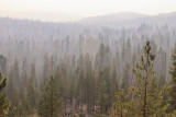 Trees stand shrouded in smoke along the southern end of the Tioga Road in Yosemite National Park