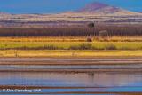Long Lens Landscape Experiment