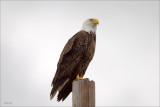 Eagle Lincoln County WA