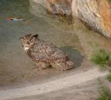 A guest in the swimming pool, Spokane County, WA