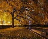 Fall at Night