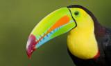 Birds / Vogels