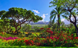 WELCOME TO PARADISE-0445.jpg