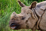 ASIAN RHINOCEROS_2624.jpg