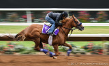 Horse Racing Panning