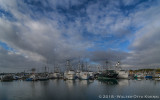 Early Morning Tuna Harbor