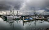 Morning at the Tuna Harbor