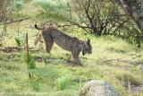 Spain mammals