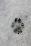 Estonia wildlife