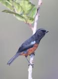 *NEW* Colombia wildlife