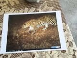 Picture of the Caucasian Leopard