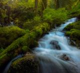 Wahkeena Creek Jumble