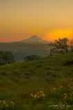 Sunset on Mt Hood