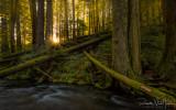 Panther Creek Sunstar