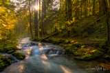 Morning Light on Panther Creek