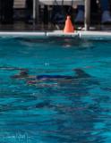2018203-Sahuarita Swim Meet-0217.jpg