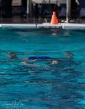 2018203-Sahuarita Swim Meet-0218.jpg