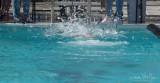 2018203-Sahuarita Swim Meet-0885.jpg