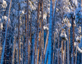 Tree Abstract #1