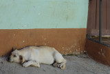 Street dogs were fairly common