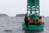 We saw some sea lions lounging on a buoy.