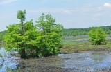 River Bottomlands