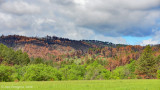 The Black Hills of Custer State Park