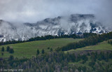 Foggy Day in Yellowstone