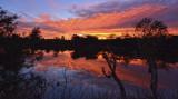 Serpentine Sunrise