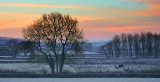 'Frosty Morning'