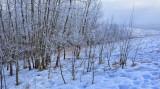 Freezing mists - Edgemont