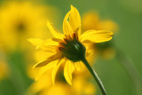 flowers__butterflies
