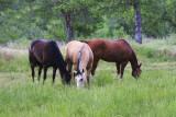 horses__western_tack