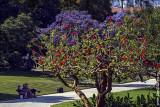 Jardins de Belem