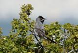 Greece - Birds & Nature