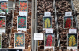 8154-bloemenmarkt.jpg