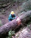 Packwood Lake Trail Clearing