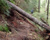 Trail Clearing - Before