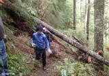 Goat Creek Trail Clearing - Before