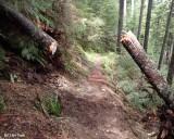 Goat Creek Trail Clearing - Cleared