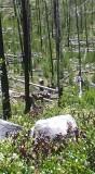 Ram Ck Trail - 2.jpg