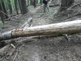 Jordan Creek Trail
