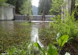 Packwood Lake Dam