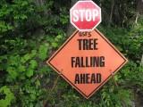 6 - Tree Falling.JPG